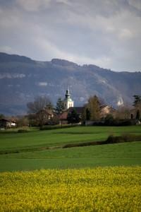 église de Thairy et colza